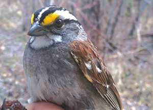 Battle between north and south birders this month