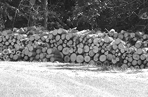Alternatives to wood?