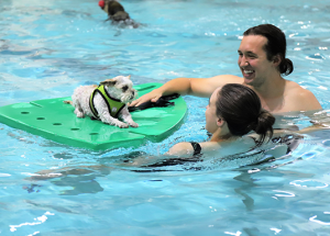 3rd Annual Animal Rescue Committee Dog Swim