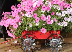 Leader's last summer garden feature for the season