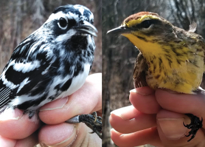 Bird report: Quiet week after the initial rush of migrants: see ebird.org