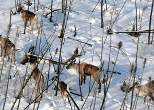 Nearby caribou range plans don't start until 2022