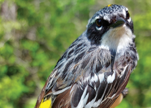 Bird report: Wrapping up spring migration
