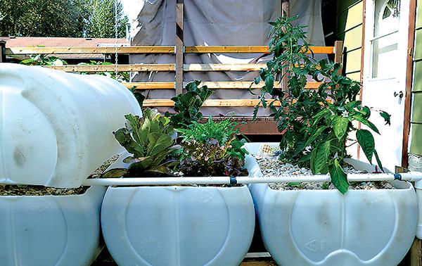 Home-made hydroponics