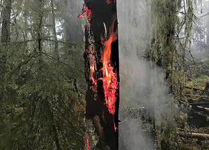 Wildfires increase in number, but firefighters keeping up